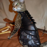 Your cat will be prepared for WORLD DOMINATION!