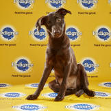 Puppy Bowl XII, Bliss