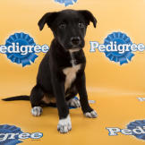Aria-starting-line-up-PuppyBowl-11-RUFF