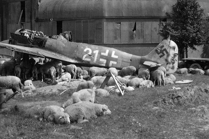 A Wulf among the sheep. This  Focke-Wulf Fw 190A-8 fighter was downed in the vicinity of Nuremberg, Bavaria.