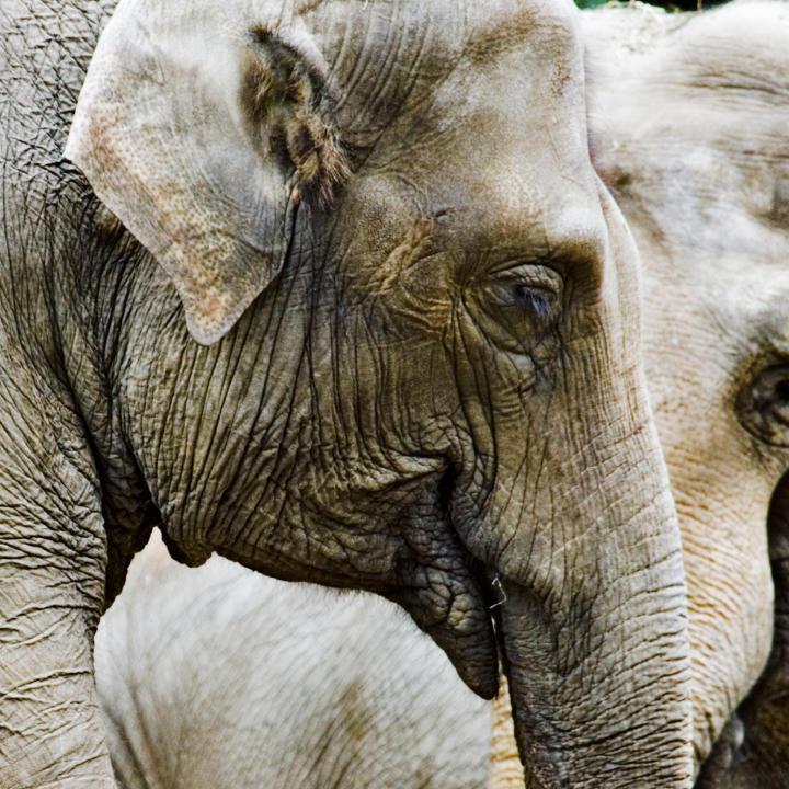 Image of: Wildlife Generalendangered Species Animal Planet Endangered Species Endangered Species Animal Planet