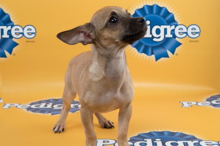 Arielle Puppy Bowl 11