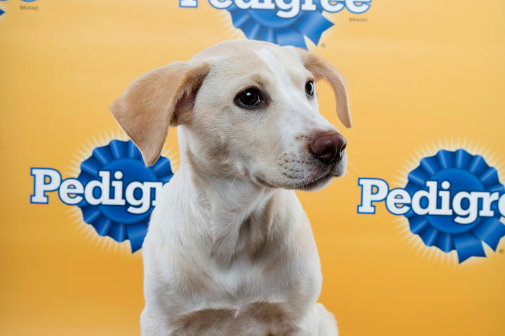 Bailey Puppy Bowl 11