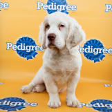 Puppy Bowl XI Starting Lineup Photos
