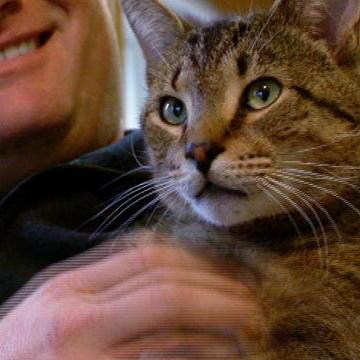 Highlights : Must Love Cats