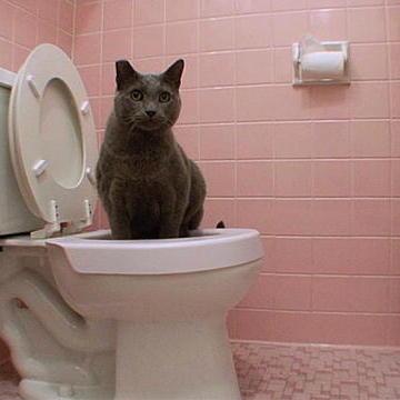 Potty Trained Kitty