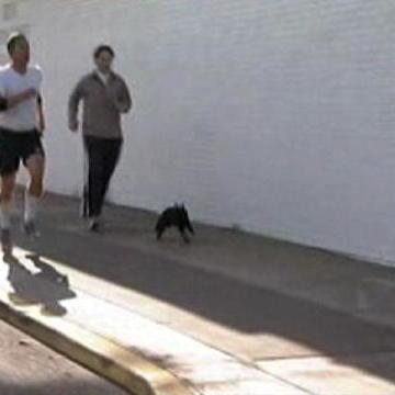 Incredible Jogging Cat