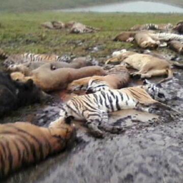 Animals Take Over Ohio Town