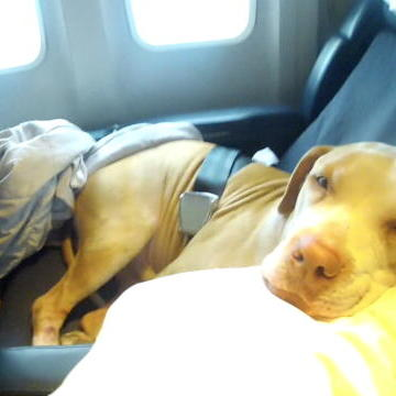 Shorty's Top Dog:Dogs on a Plane, Way Cuter than Snakes