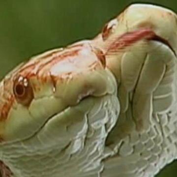 Incredible Snake Videos