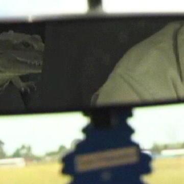 Fatal Attractions: Reptile Videos