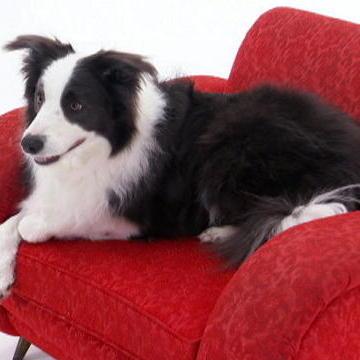 Top 10 Smartest Dogs