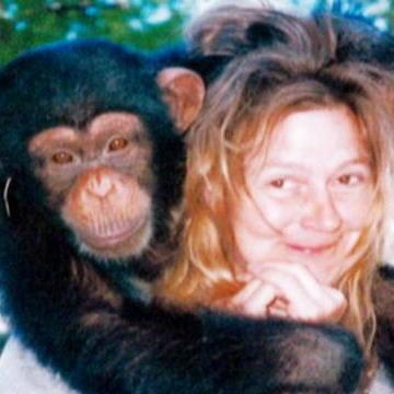 Fatal Attractions: Chimp Videos