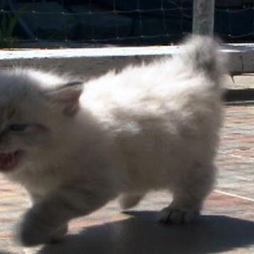 cats 101 cats 101 latest clips meet the felines in the latest video ...