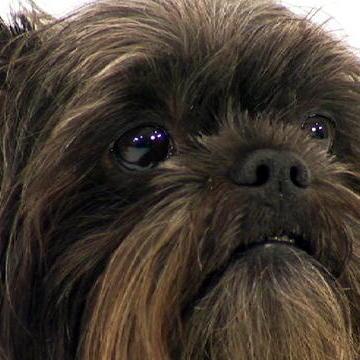 Dog Breeds A - K
