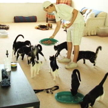 Most You-Won't-Even-Believe Animal Hoarding Moments
