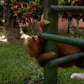 Sloths Do Gymnastics!