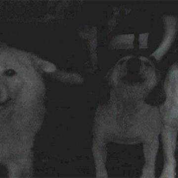 Animal Hoarding: Ginny