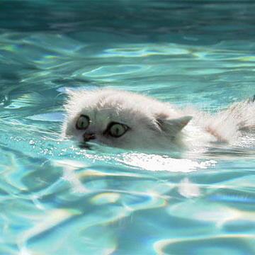 Kitty Paddle