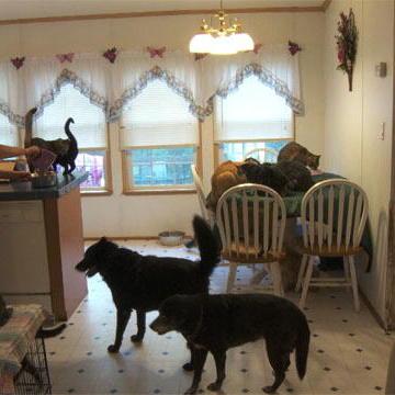 Animal Hoarding: Angie