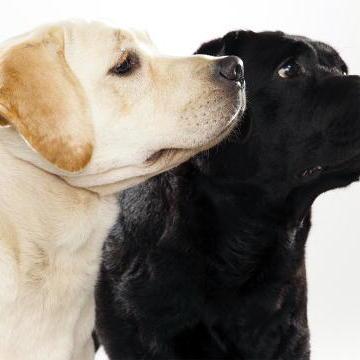Dog Breeds L-Z