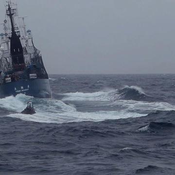 Sneak Peek: Whale Wars