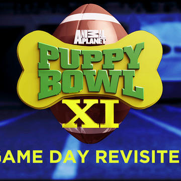 Game Day Revisited:Puppy Bowl XI: No Ordinary Sunday