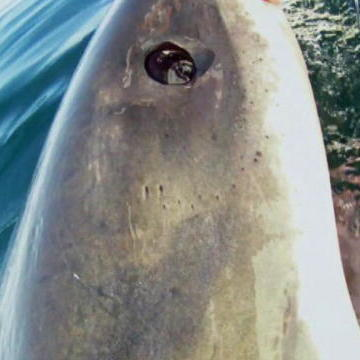 Top 45 Great White Shark Videos