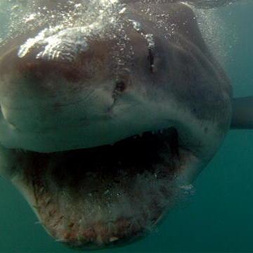 A legendary shark - ViewBug.com |Legendary Sharks