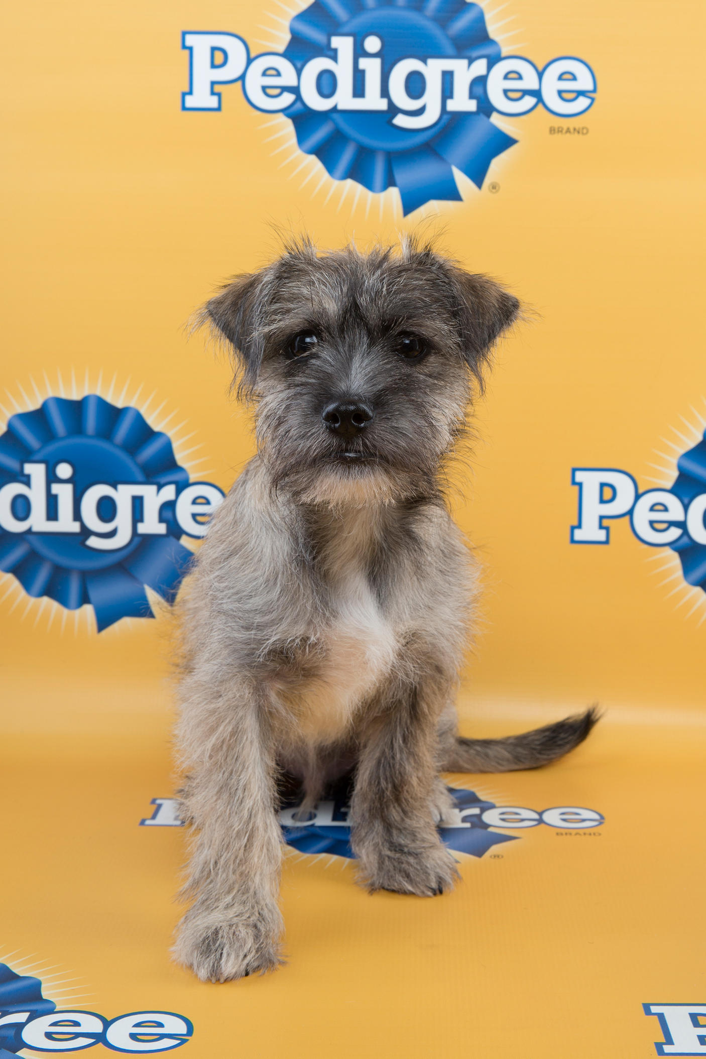 Oscar marcus Puppy Bowl 11, puppy bowl xi, puppy bowl, starting lineup, lineup, puppy, puppies
