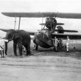 pg-01-animals-elephant-plane