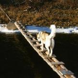 The-Last-Alaskans-Bob-Harte-12
