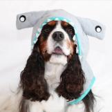 sharkdog9
