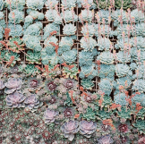 succulents10