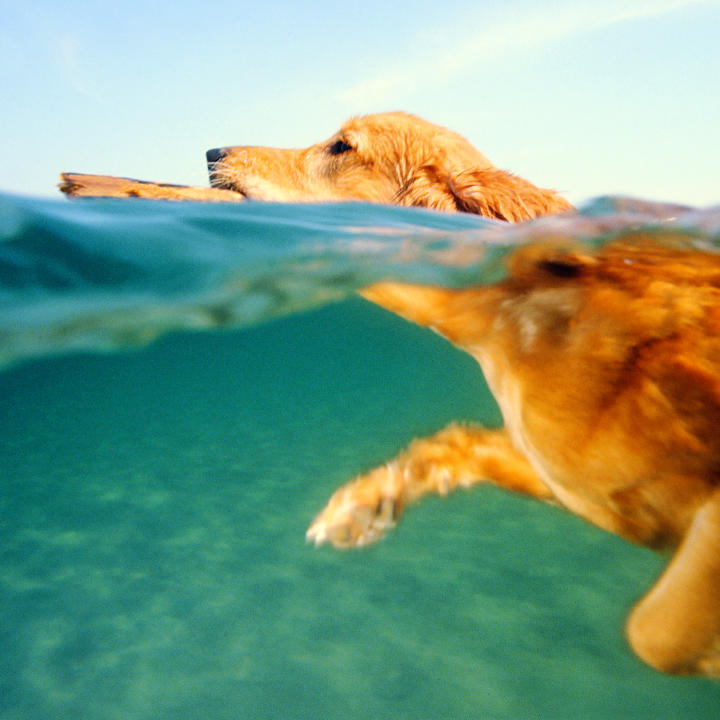 Dog Behavior   Dog Behavior   Animal Planet