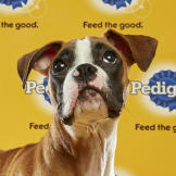 Puppy Bowl XII, Amber