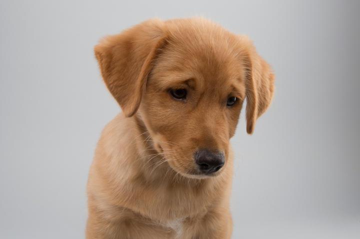 Puppy Bowl 11, Papi