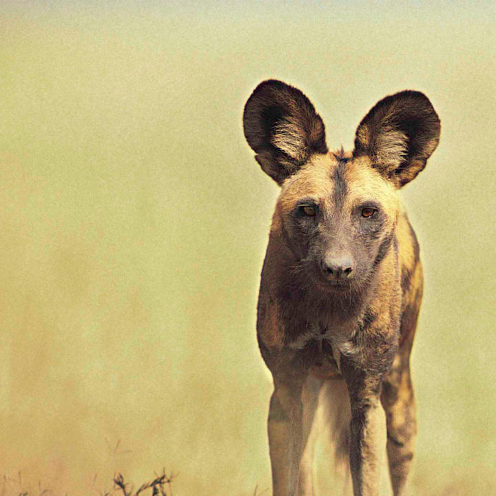 endangered species endangered species animal planet