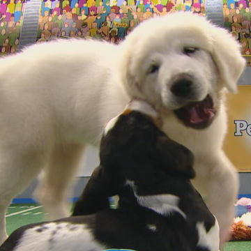 Puppy Bowl Hall of Fame