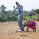 Every year, the death toll rises with 25,000 African elephants murdere