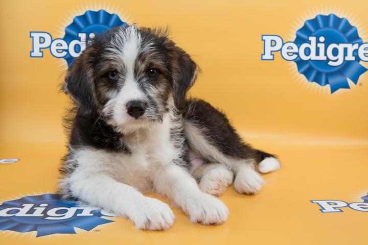 Blue Puppy Bowl 11