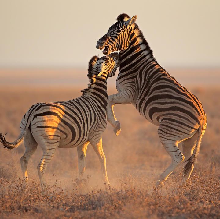 wild animals animal planet