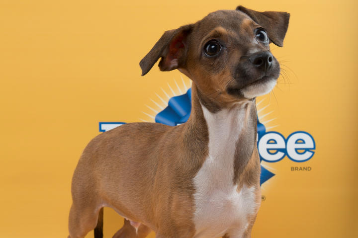 Andy Puppy Bowl