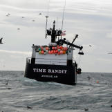 The Time Bandit searches for crabs.