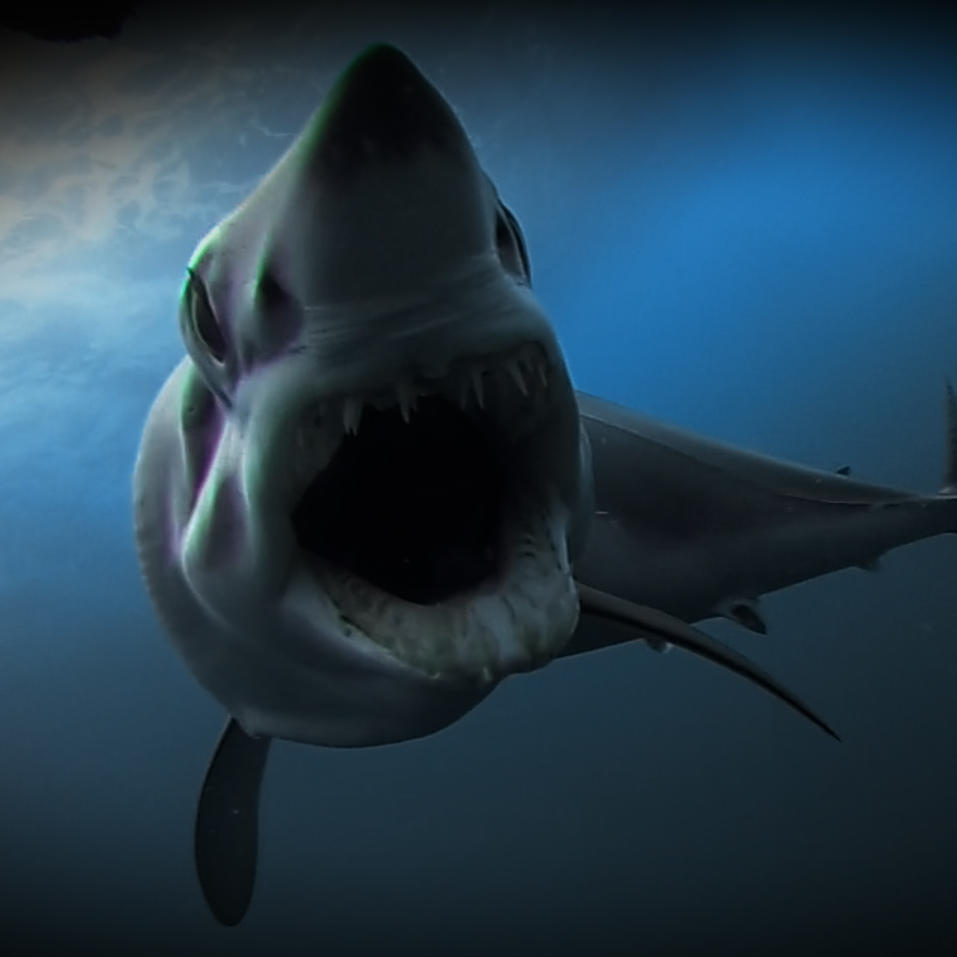 The World's Fastest Shark Chases Bait