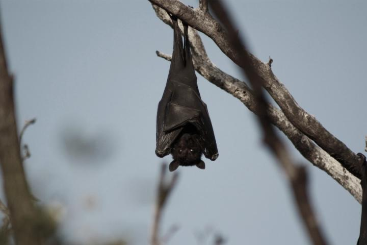Bat hanging from a tree