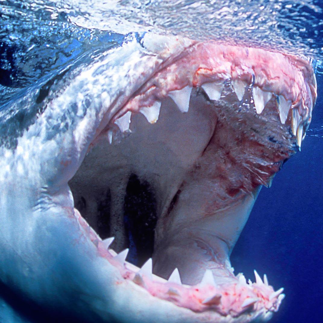 Rare But Terrifying Animal Attacks
