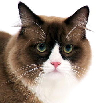 Cat Breed Videos A to Z