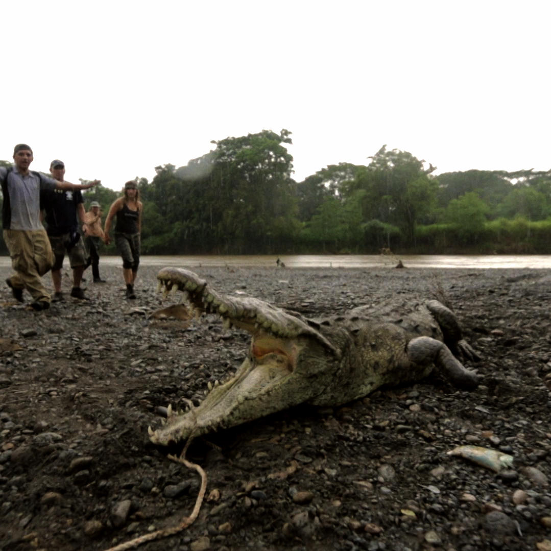 Catching Monster Crocs in Costa Rica for Science