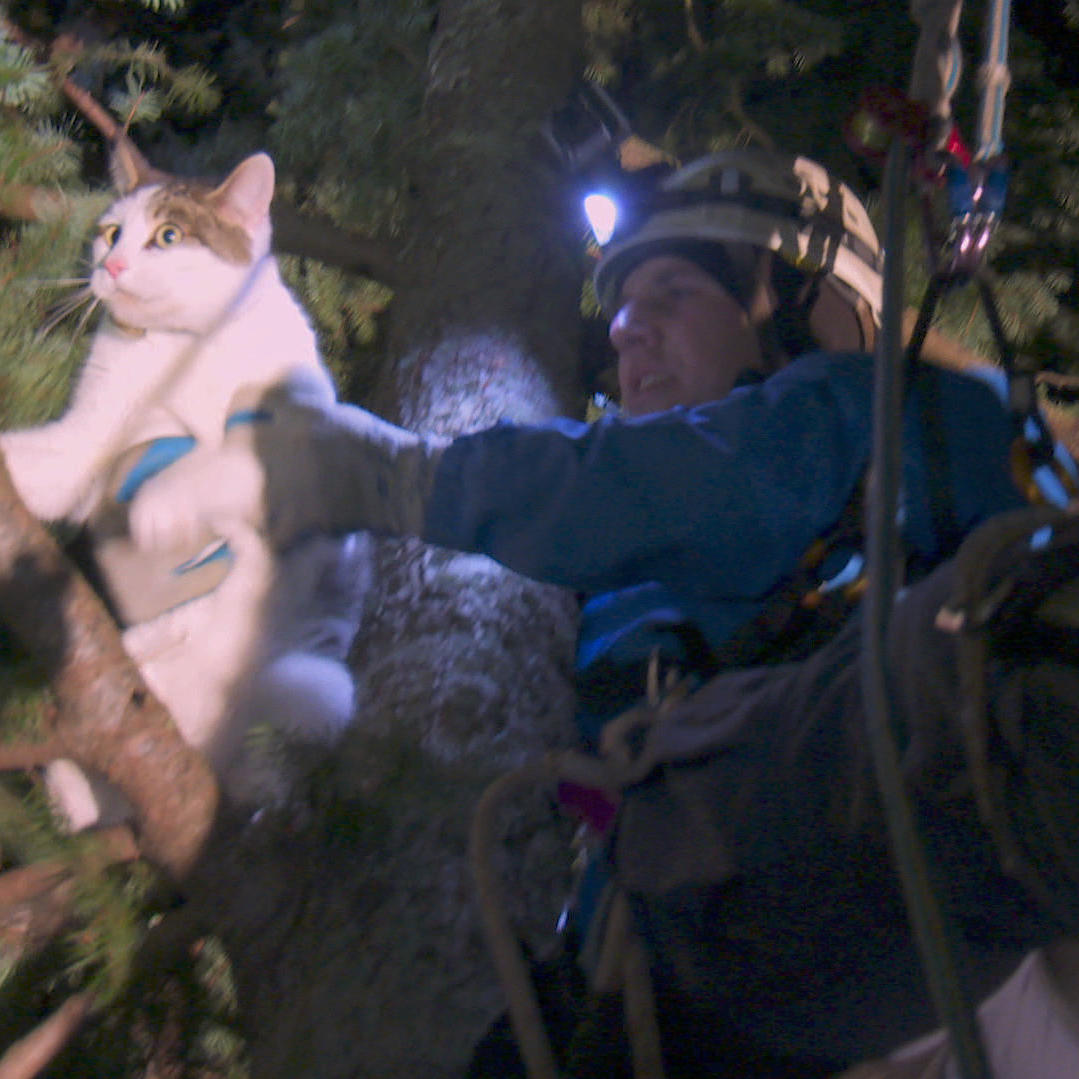 Spaz the Cat Rescued From Tall Tree, Reunites With Grateful Family